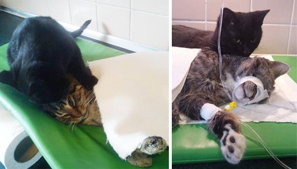El curioso caso del gato enfermero de Polonia 04