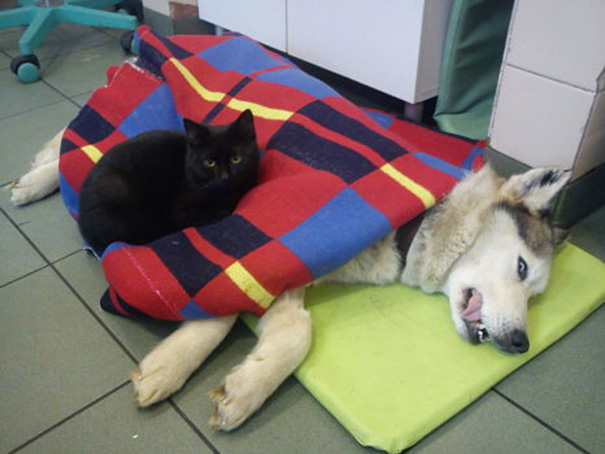 El curioso caso del gato enfermero de Polonia 05