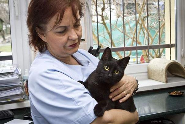 El curioso caso del gato enfermero de Polonia 09