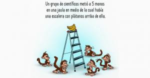 El porqué de algunos de los comportamientos de nuestra sociedad explicados por este grupo de monos