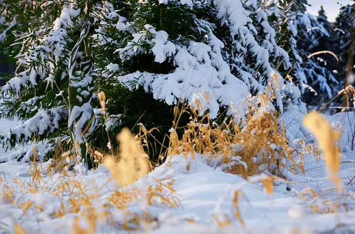 Encuentras a las modelos en estas fotografías nieve