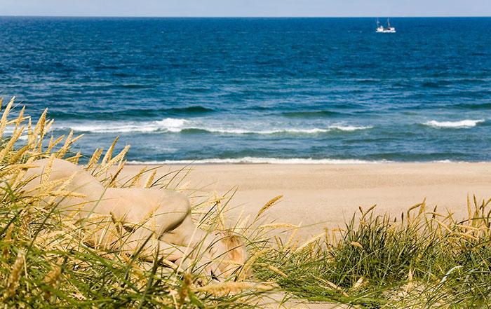 Encuentras a las modelos en estas fotografías playa