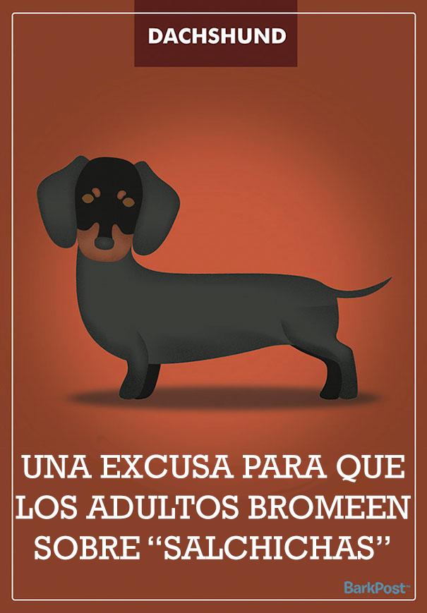 Eslóganes de razas de perro que ironizan con sus estereotipos dachshund