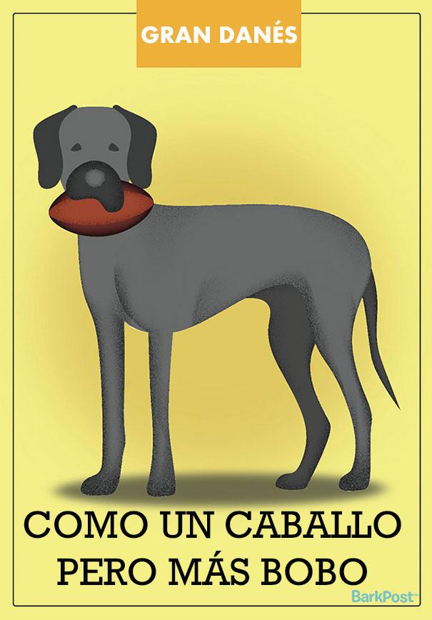 Eslóganes de razas de perro que ironizan con sus estereotipos grand danes