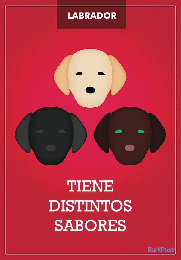 Eslóganes de razas de perro que ironizan con sus estereotipos labrador