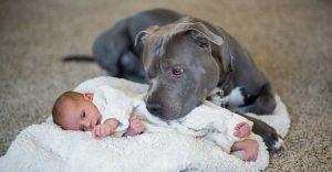 Este perro y esta niña se hicieron mejores amigos hasta que algo todo lo cambió