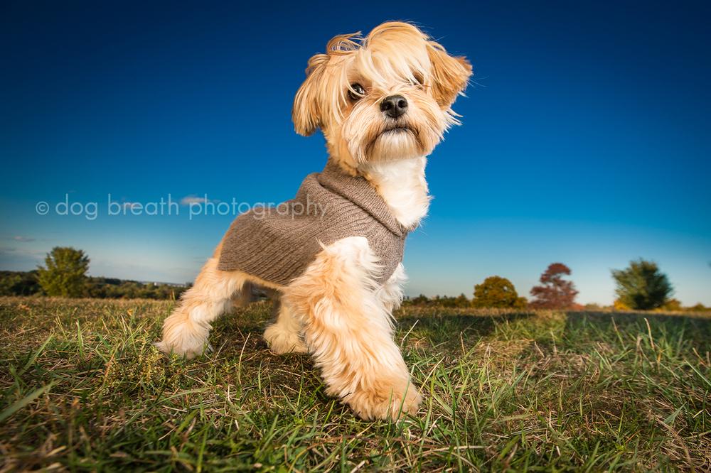 Estos perros no podrían lucir más adorables en esta tierna sesión de fotos 02