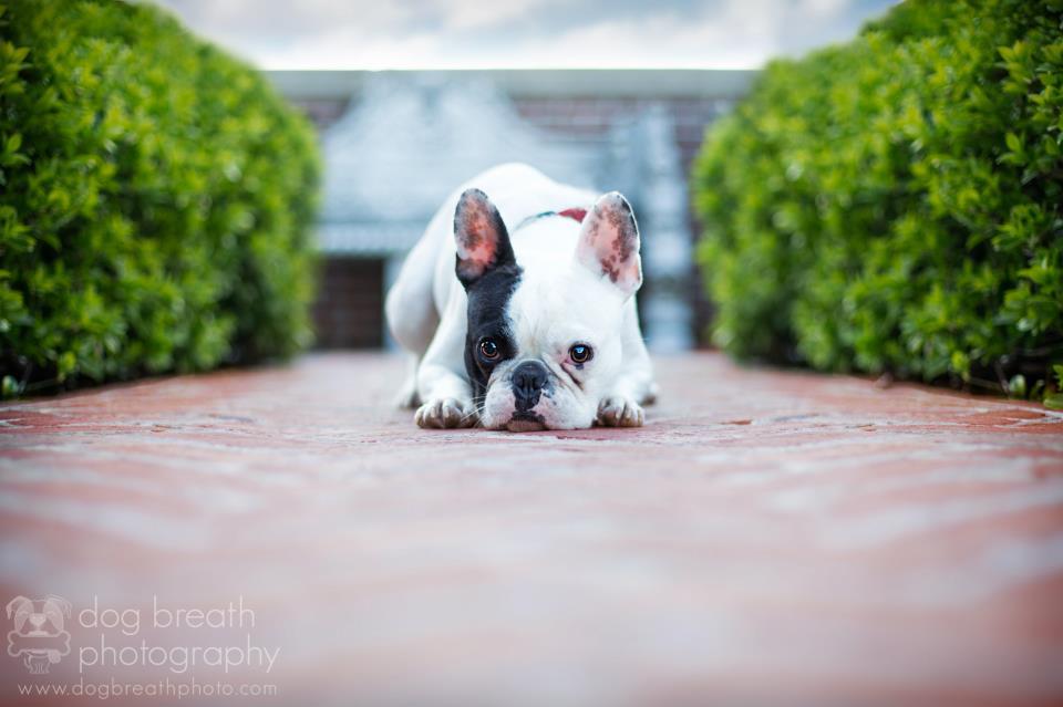 Estos perros no podrían lucir más adorables en esta tierna sesión de fotos 05