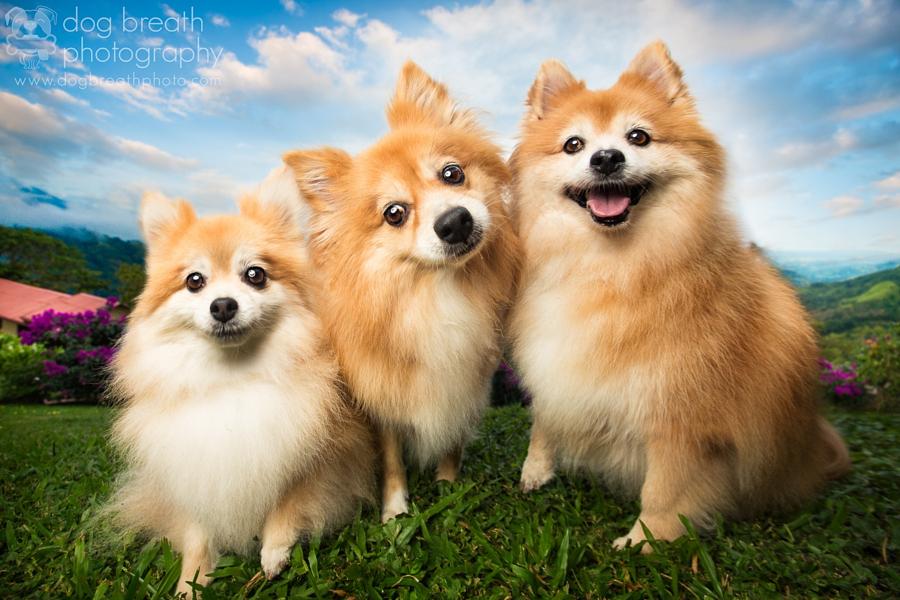 Estos perros no podrían lucir más adorables en esta tierna sesión de fotos 08
