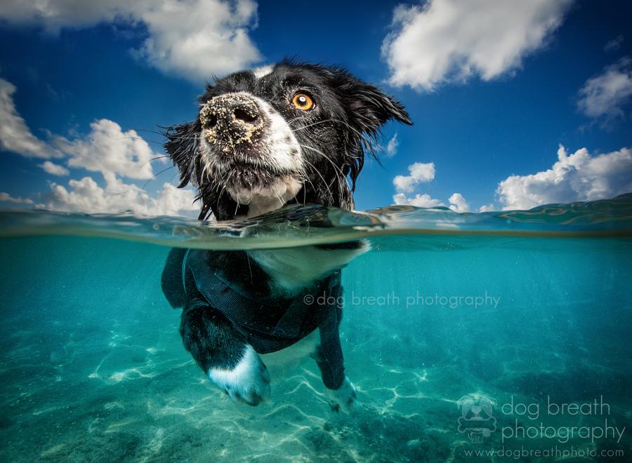 Estos perros no podrían lucir más adorables en esta tierna sesión de fotos 09