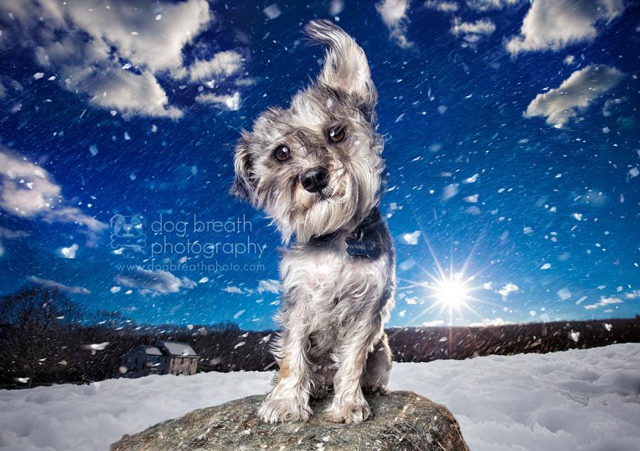 Estos perros no podrían lucir más adorables en esta tierna sesión de fotos 10
