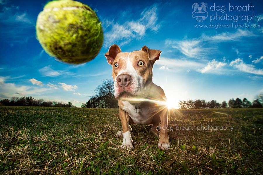 Estos perros no podrían lucir más adorables en esta tierna sesión de fotos 11