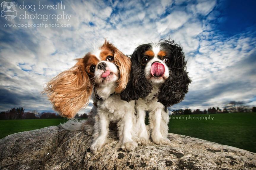 Estos perros no podrían lucir más adorables en esta tierna sesión de fotos 13