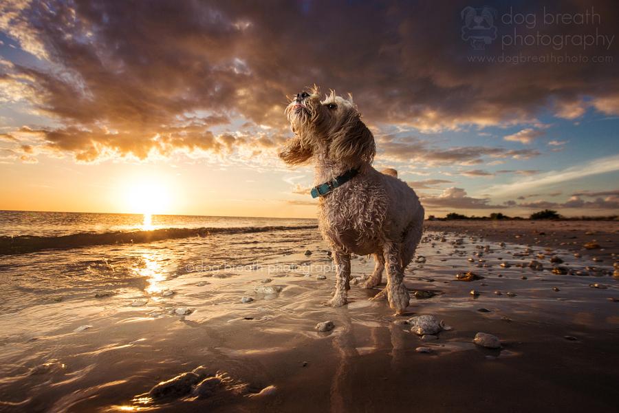 Estos perros no podrían lucir más adorables en esta tierna sesión de fotos 15