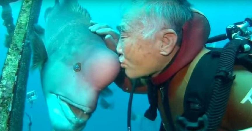 La amistad de 25 años entre un pez y un buzo