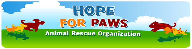 La excelente labor de Hope for Paws y su compromiso por ayudar a perros necesitados 01