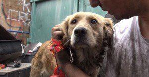 La excelente labor de Hope for Paws y su compromiso por ayudar a perros necesitados