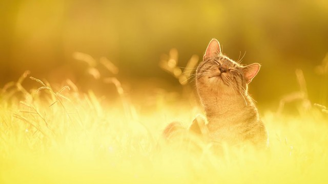La majestuosidad de los gatos inmortalizada en estas fotos 01