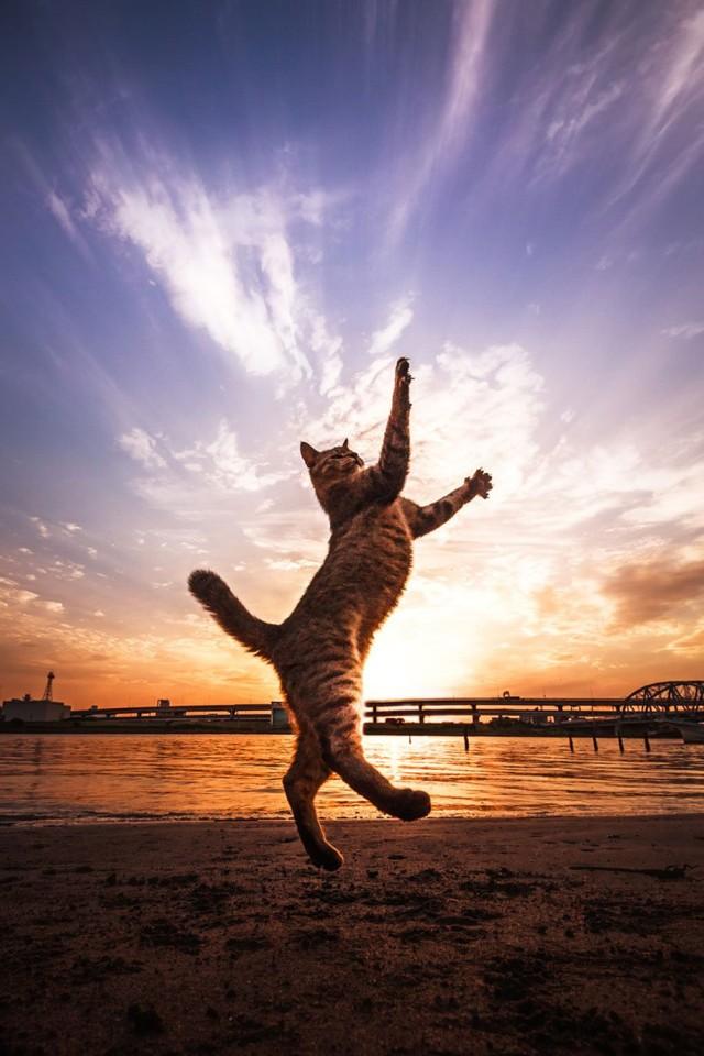 La majestuosidad de los gatos inmortalizada en estas fotos 02