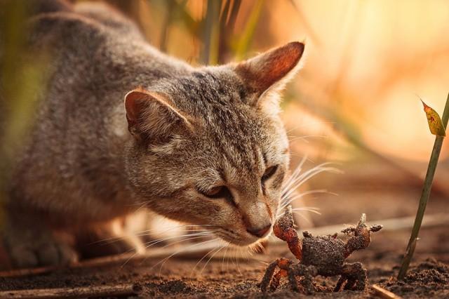 La majestuosidad de los gatos inmortalizada en estas fotos 03
