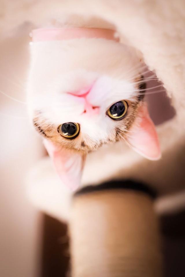La majestuosidad de los gatos inmortalizada en estas fotos 04