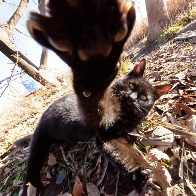 La majestuosidad de los gatos inmortalizada en estas fotos 05