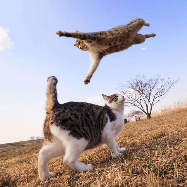 La majestuosidad de los gatos inmortalizada en estas fotos 07
