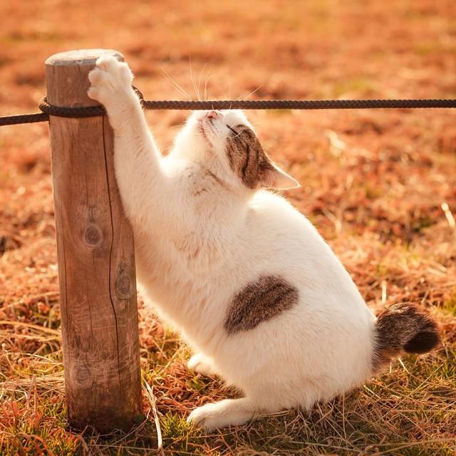 La majestuosidad de los gatos inmortalizada en estas fotos 09