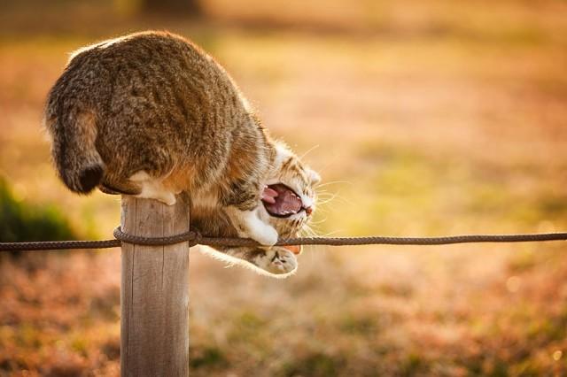 La majestuosidad de los gatos inmortalizada en estas fotos 10