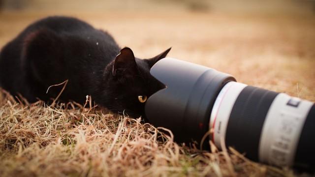 La majestuosidad de los gatos inmortalizada en estas fotos 11