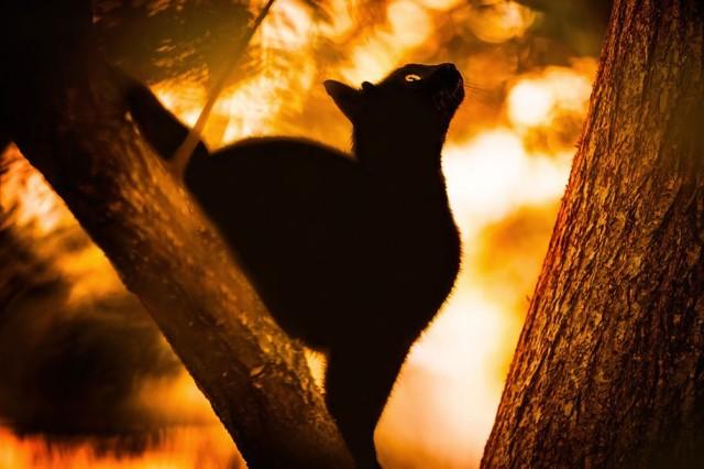 La majestuosidad de los gatos inmortalizada en estas fotos 12