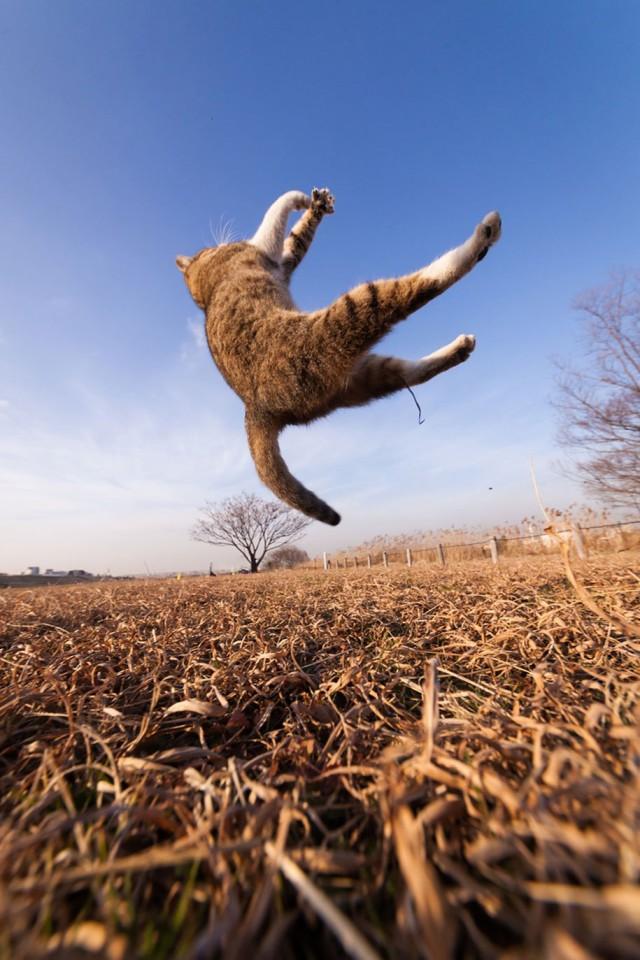 La majestuosidad de los gatos inmortalizada en estas fotos 15