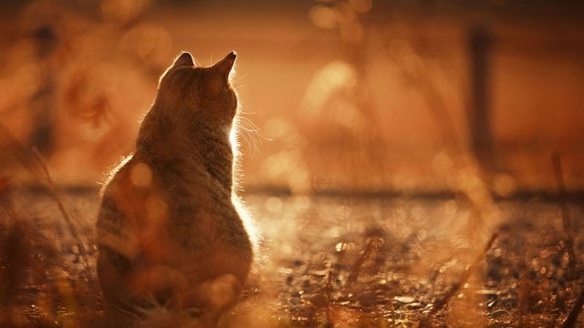 La majestuosidad de los gatos inmortalizada en estas fotos 16