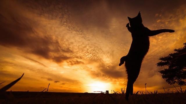 La majestuosidad de los gatos inmortalizada en estas fotos 17