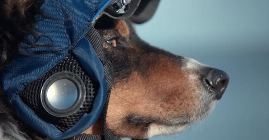 Pasea a tu perro desde casa con este nuevo dispositivo 5
