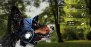 Pasea a tu perro desde casa con este nuevo dispositivo