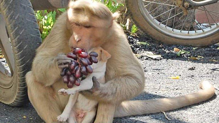 mono adopta a cachorro abandonado 3