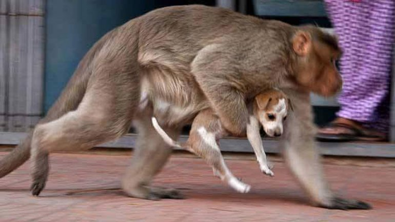mono adopta a cachorro abandonado 5