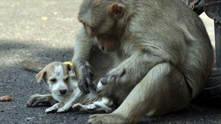 mono adopta a cachorro abandonado 7