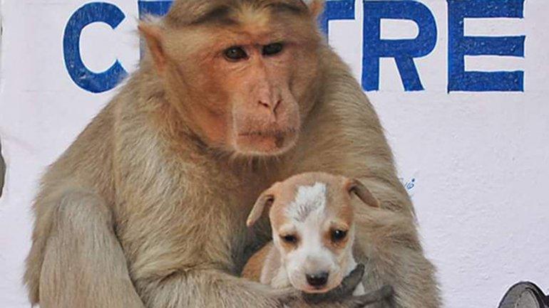 mono adopta a cachorro abandonado 9