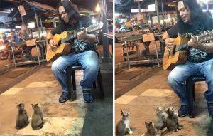 ¿Alguna vez te has preguntado cómo es que reaccionan los animales con la música?