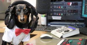 Crusoe, el perro Dachshund más popular te sorprenderá con estos vídeos