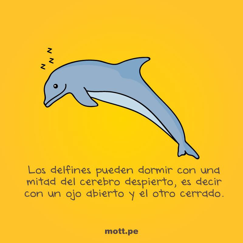 Curiosos-y-extraños-datos-del-mundo-animal-delfin-mott-final-final