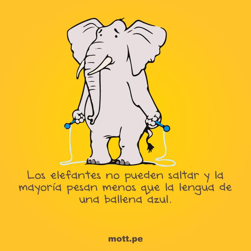 Curiosos-y-extraños-datos-del-mundo-animal-elefante-mott-final