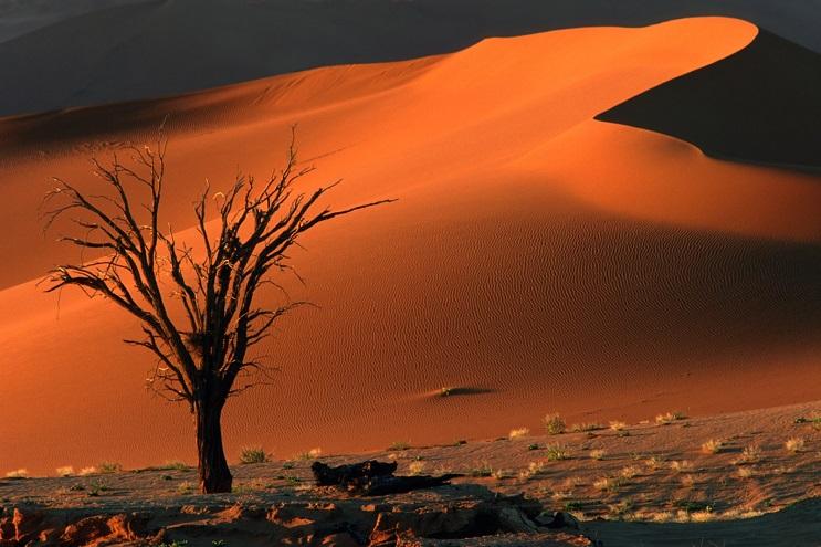 Datos curiosos que están ayudando a disminuir el daño al medio ambiente 7