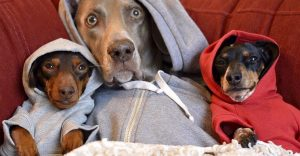 Estos perros adoptaron un nuevo cachorro y son lo más tiernos que existe
