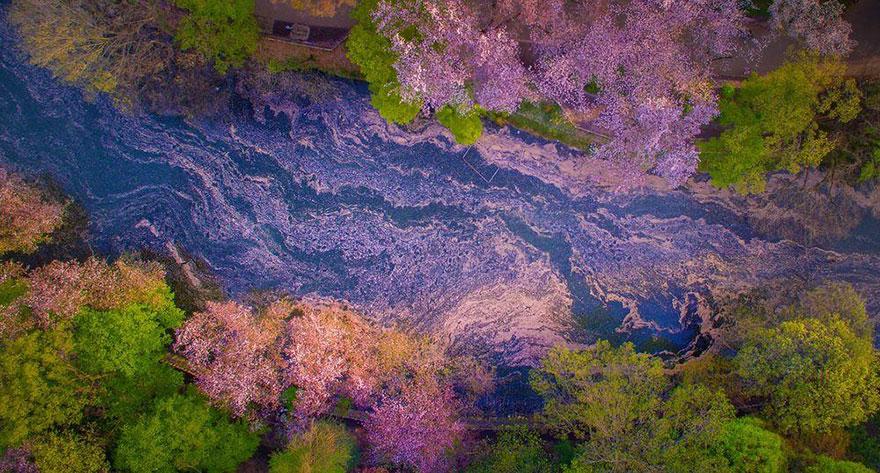 La magia de los árboles de cerezo3