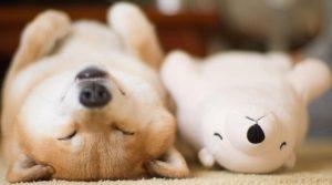 Los perros más famosos de Instagram que te conquistarán