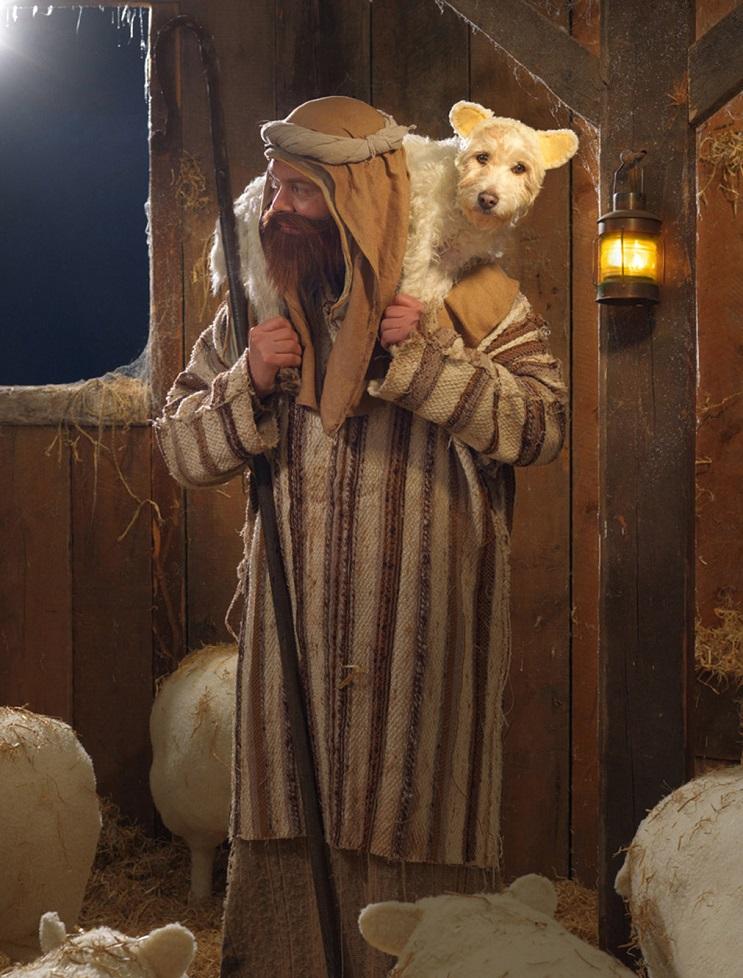 Perro posa para su dueño y es la imagen de sus postales 11