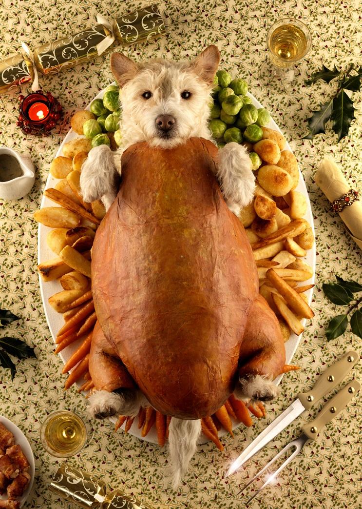 Perro posa para su dueño y es la imagen de sus postales 12
